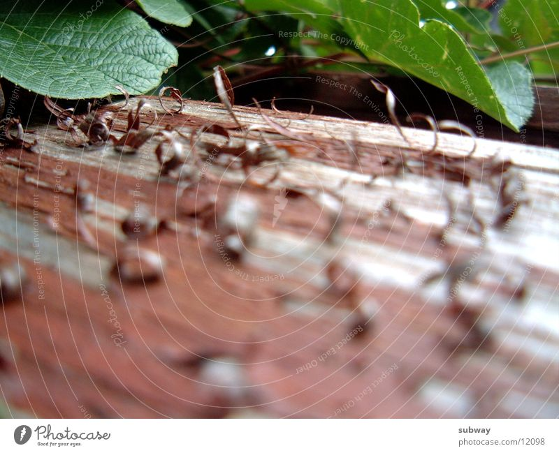 DerLackistAB Haus Holz Wetter Handwerk Holzbrett verwittert Balken Holzmehl lackiert Abnutzung überzogen Schliff