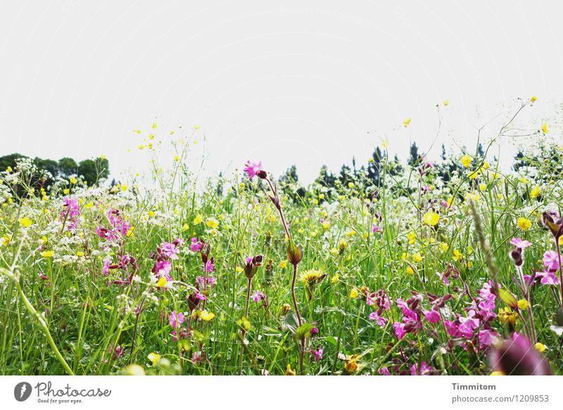 Irgendwo im Allgäu (5). Natur Ferien & Urlaub & Reisen Pflanze grün Landschaft Umwelt gelb Blüte Gefühle Wiese natürlich ästhetisch Lebensfreude Schönes Wetter