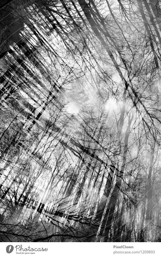 Wald Natur Ferien & Urlaub & Reisen weiß Baum Einsamkeit Landschaft Tier dunkel schwarz Herbst Holz Kunst Park träumen Design