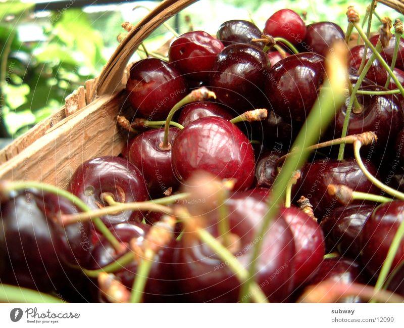cHeRRys Natur rot Sommer Garten Gesundheit Frucht frisch süß lecker Kirsche saftig Kindheitserinnerung Geschmackssinn fruchtig Zucker Steinfrüchte