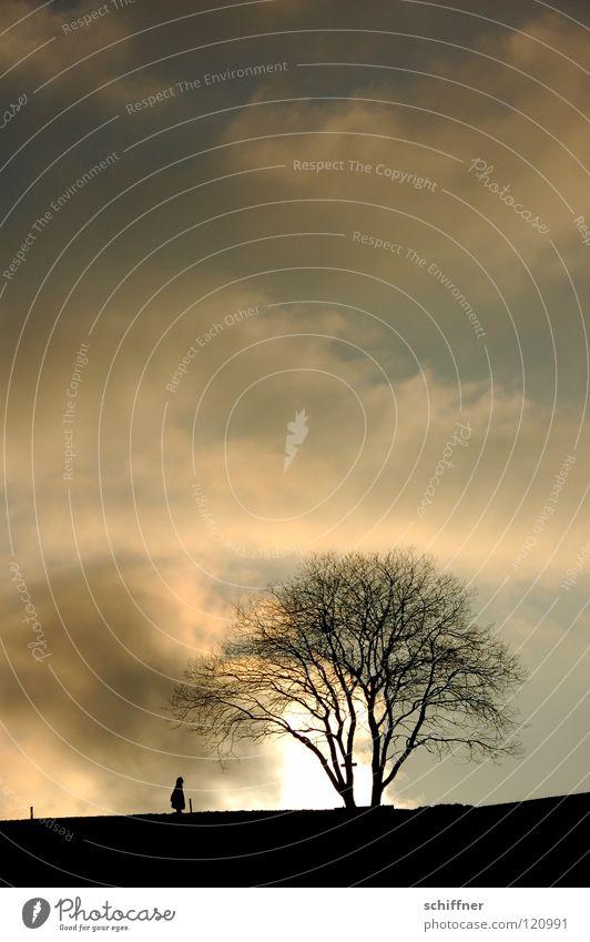 Wolkenspaziergang Mensch Natur Himmel Baum Sonne Winter Einsamkeit Ferne kalt Berge u. Gebirge gehen Spaziergang Zaun Pfosten Erkenntnis