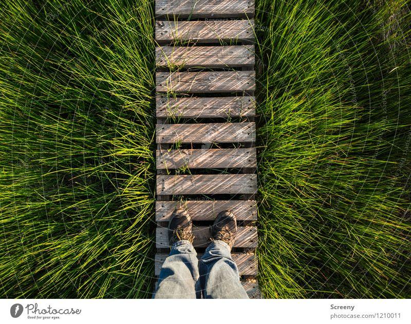 Bretter, die die Welt bedeuten... Mensch Natur Ferien & Urlaub & Reisen Pflanze grün Sommer Landschaft ruhig Frühling Wiese Gras natürlich Wege & Pfade Holz Beine braun