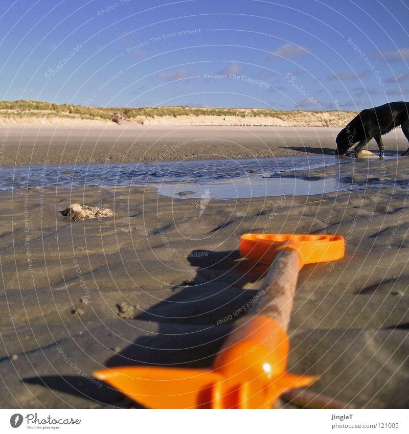 wechselwirkung Wasser Himmel Meer Freude Strand ruhig schwarz Wolken Einsamkeit Ferne Erholung Spielen Gras Holz Hund Stein