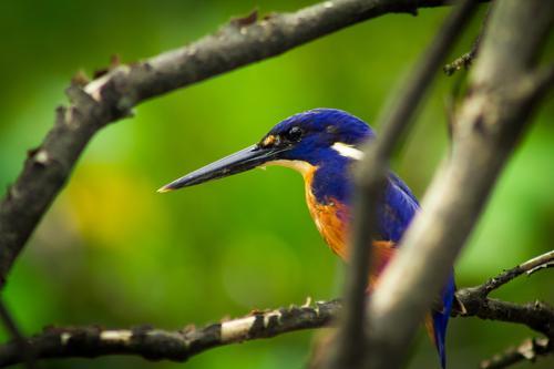 Long live the King(fisher)! Natur schön Farbe Tier Umwelt natürlich Vogel elegant Wildtier Feder sitzen ästhetisch Ast einzigartig entdecken Umweltschutz