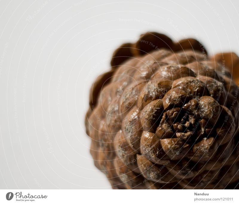 O'zapft Natur Winter Ernährung grau Lebensmittel hell braun Dekoration & Verzierung Italien Spirale Anordnung Weihnachtsdekoration Tannenzapfen Pinie