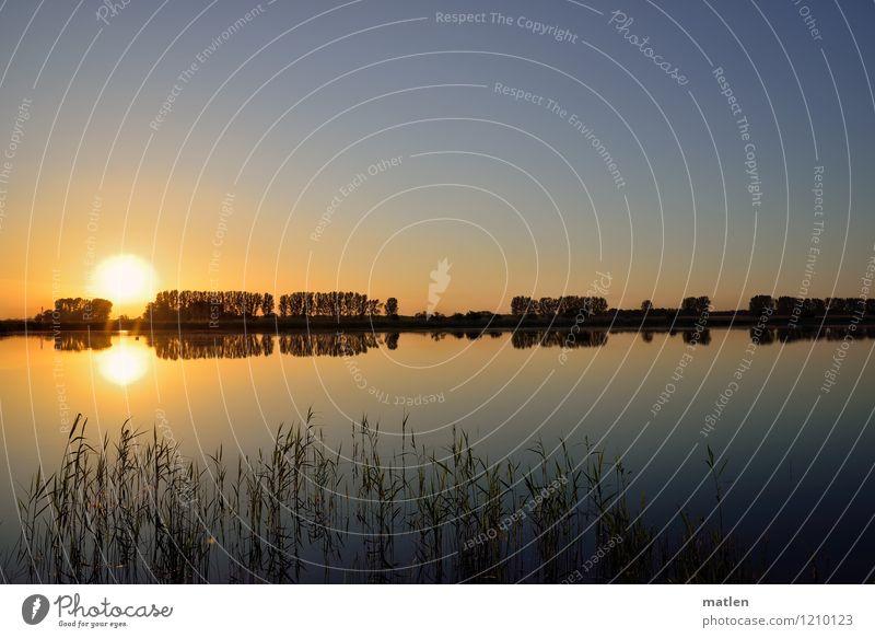 Johnny Walker kommt... Umwelt Natur Landschaft Pflanze Wasser Himmel Horizont Sonnenaufgang Sonnenuntergang Wetter Schönes Wetter Baum Gras Sträucher Küste