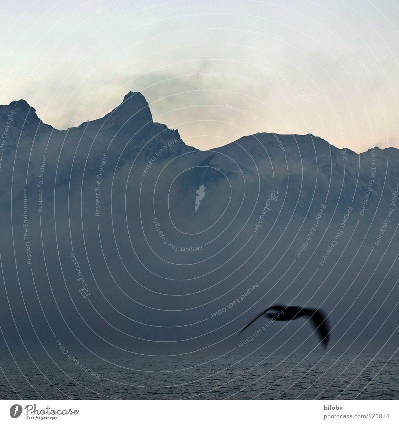 elements VII Himmel Wasser Einsamkeit Winter dunkel Berge u. Gebirge kalt Leben grau See Stein Vogel Erde Felsen Wetter Nebel