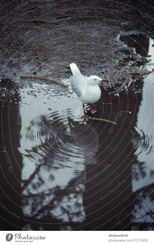 Heute nehme ich kein Shampoo Sommer Wasser Freude Tier Umwelt außergewöhnlich braun Vogel Park genießen Ausflug fantastisch beobachten niedlich Schönes Wetter Neugier