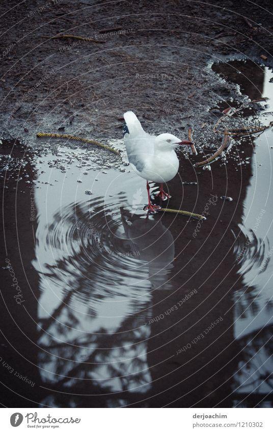 Heute nehme ich kein Shampoo Sommer Wasser Freude Tier Umwelt außergewöhnlich braun Vogel Park genießen Ausflug fantastisch beobachten niedlich Schönes Wetter