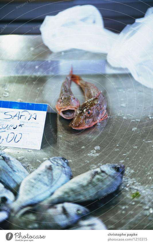 How much is the fish? Lebensmittel Fisch Ernährung Ferien & Urlaub & Reisen Tourismus Küche Handel Gastronomie Tier Totes Tier Schuppen 2 Ekel frisch schleimig