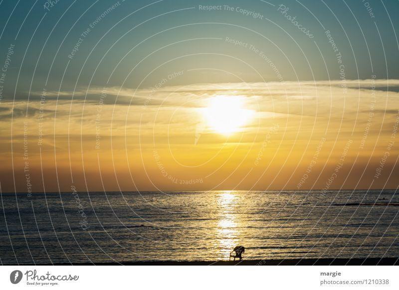 Erst Reihe, ein Sonnenuntergang am Meer Erholung ruhig Meditation Ferien & Urlaub & Reisen Tourismus Ferne Freiheit Kreuzfahrt Sommer Strand Israel Umwelt