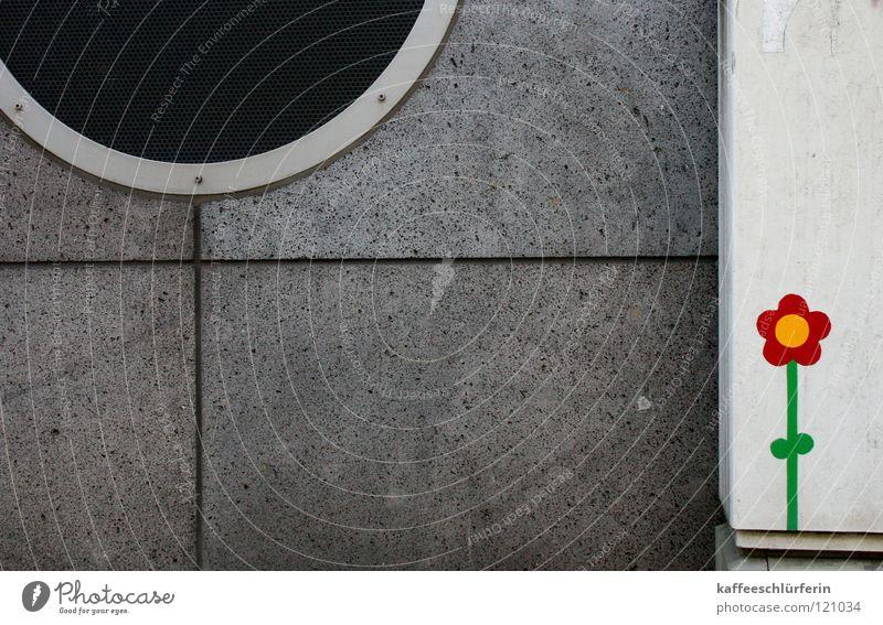graubunt. Blume Stadt Pflanze Wand grau Mauer trist mehrfarbig gemalt