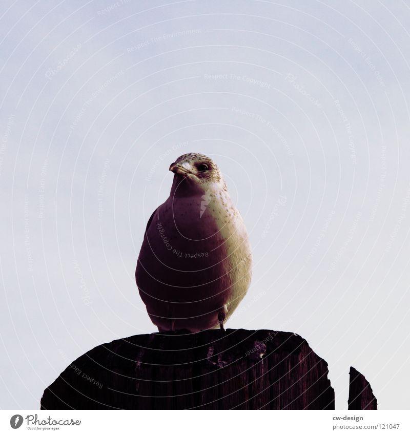 kaum steh ich hier und singe... Anlegestelle stehen singen Fluggerät Säule dunkel Vogel Luft frei Geschwindigkeit langsam vergangen Zugvogel grau Schnabel schön