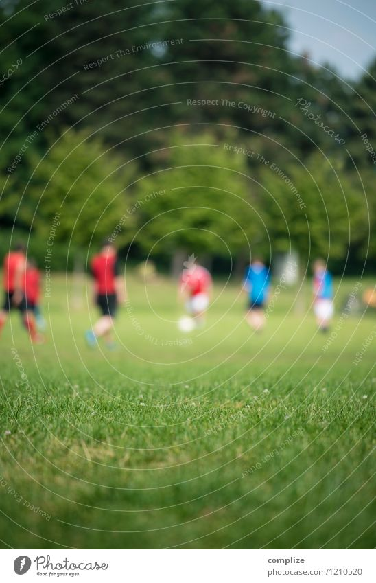 Russland vs. Katar Mensch Frau Mann grün Sonne Freude Erwachsene feminin Sport Spielen Gesundheit Horizont Park maskulin Freizeit & Hobby Erfolg