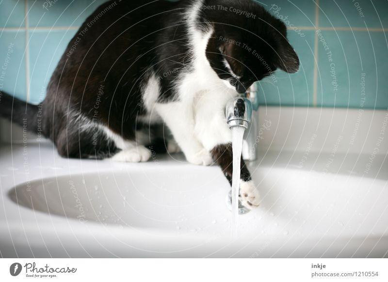 Katzenleben - vorsichtig testen Wasser weiß Tier schwarz Tierjunges Lifestyle Freizeit & Hobby Häusliches Leben beobachten nass niedlich berühren Neugier Bad