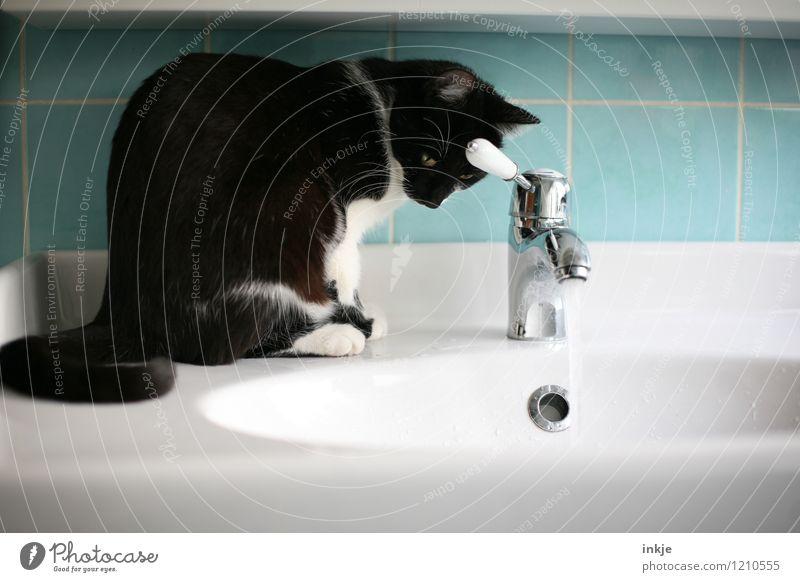Katzenleben - aussitzen Häusliches Leben Bad Haustier 1 Tier Wasserstrahl Wasserhahn Waschbecken Waschtisch beobachten hocken Blick nass Neugier schwarz türkis