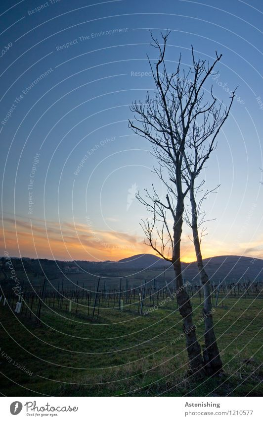 Zwillinge beobachten den Sonnenuntergang Umwelt Natur Landschaft Pflanze Luft Himmel Horizont Sonnenaufgang Sonnenlicht Frühling Wetter Schönes Wetter Baum Gras