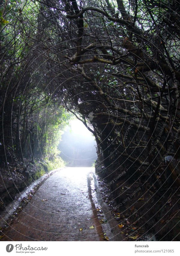 spooky path Costa Rica Poas Nationalpark Tunnel Angst Panik Südamerika volcano light at the end bewitched cloud forest
