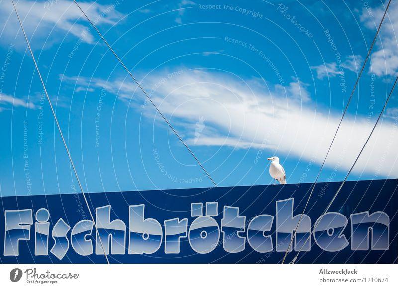Auf der Lauer Lebensmittel Fisch Fingerfood Fischbrötchen Snack Jagd Tier Vogel Möwe 1 Fressen hängen warten geduldig Ostsee blau Farbfoto Außenaufnahme