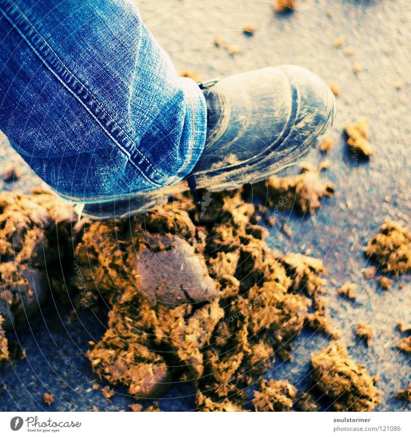STOOOP!!!!! Tier Freiheit Traurigkeit Fuß Schuhe Beine dreckig gehen laufen Jeanshose Wut Kot Verkehrswege Geruch Ekel Ärger