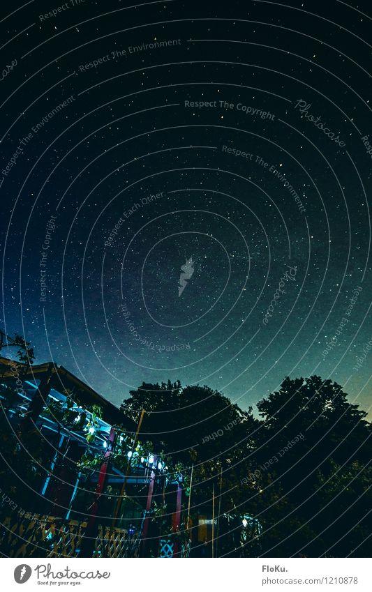 Sterne über Hamburg Umwelt Natur Urelemente Himmel Nachthimmel Garten dunkel blau Gartenhaus Schrebergarten Sternenhimmel Baum Dämmerung Lichterkette Hamburger
