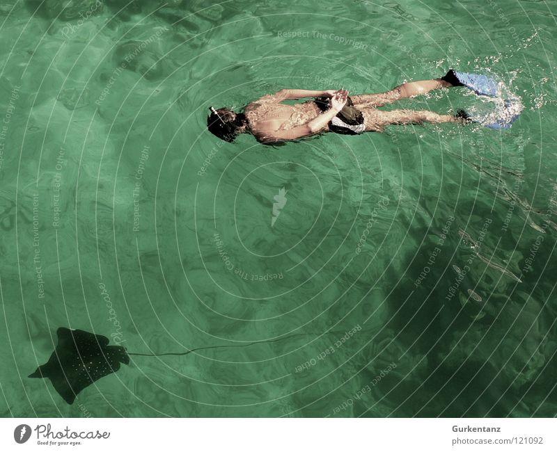 Rochenjäger Wasser Meer Tier Fisch tauchen Schwimmhilfe Wassersport Badehose Schnorcheln Rochen Asien Malaysia Borneo Adler Rochen