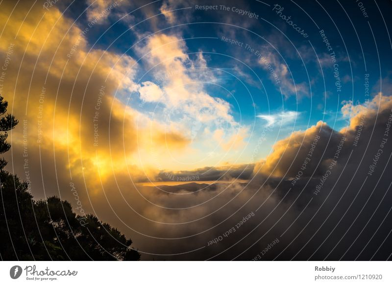 Mount Warning - Ein letzter Sonnenstrahl Himmel Natur Ferien & Urlaub & Reisen blau Farbe Landschaft Wolken Ferne Wald Umwelt Berge u. Gebirge Freiheit Horizont