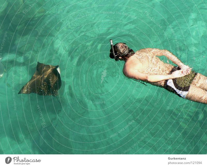 Roch'n'Roll Rochen tauchen Taucher Schnorcheln Schnorchler Meer Adler Rochen Badehose Tauchgerät Taucherbrille Fisch Wassersport Unterwasseraufnahme ray