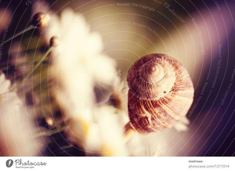 Meine Welt steht Kopf elegant Stil Design Sommer Blume Blüte Topfpflanze Margerite Margeritenknospen Garten Schneckenhaus 1 Tier genießen hängen leuchten