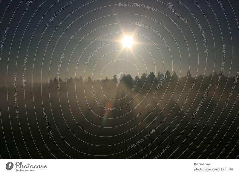 Hetzjagt Sonne Wald dunkel Nebel Holzmehl