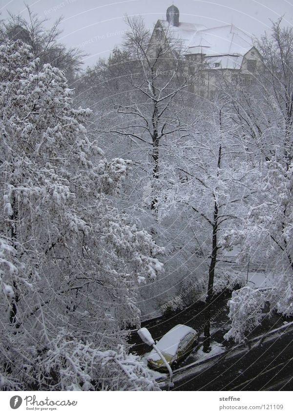 Klimawandel I weiß Baum Winter Schnee Gebäude PKW Wohnung groß Häusliches Leben Balkon Aussicht Schneeflocke Dachgeschoss
