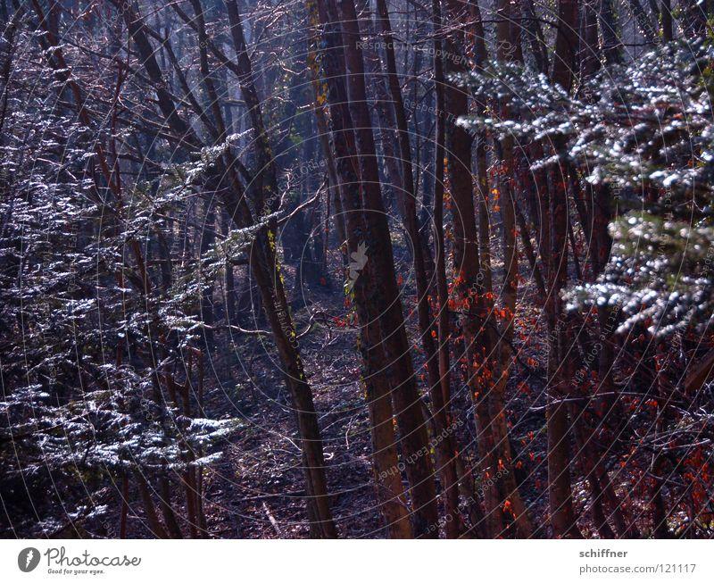 Im Dunkeln... Baum Winter Blatt Wald dunkel Holz Angst wandern Spaziergang Baumstamm Panik Berghang Forstwirtschaft Unterholz Blätterdach