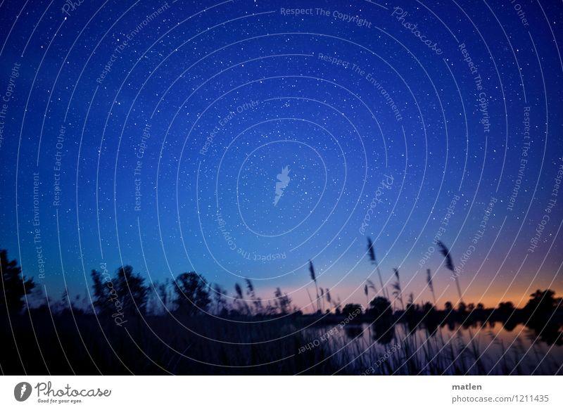 sternklare Nacht Natur Landschaft Pflanze Himmel Wolkenloser Himmel Nachthimmel Stern Horizont Wetter Schönes Wetter Baum Gras Sträucher Küste Seeufer Moor