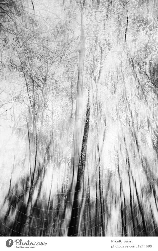 Wald Natur Ferien & Urlaub & Reisen Pflanze weiß Baum Blatt Tier dunkel schwarz Umwelt Herbst Stil Holz Kunst Park