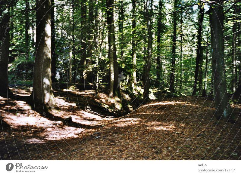 Licht und Schatten Sonne Wald Herbst Berge u. Gebirge