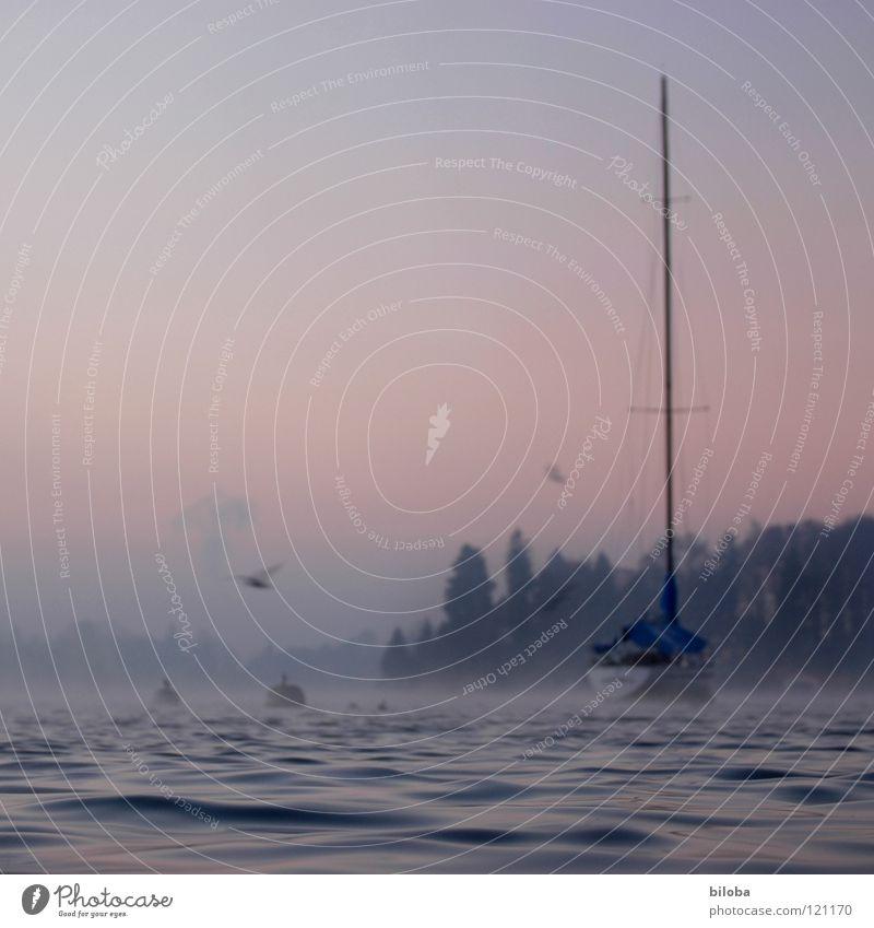 Boat IV Wasserfahrzeug teuer wiegen Wellen Segelboot liquide kalt tief See Schweiz Wald Nebel Stimmung unberührt harmonisch Winter ruhig gleiten Gewässer