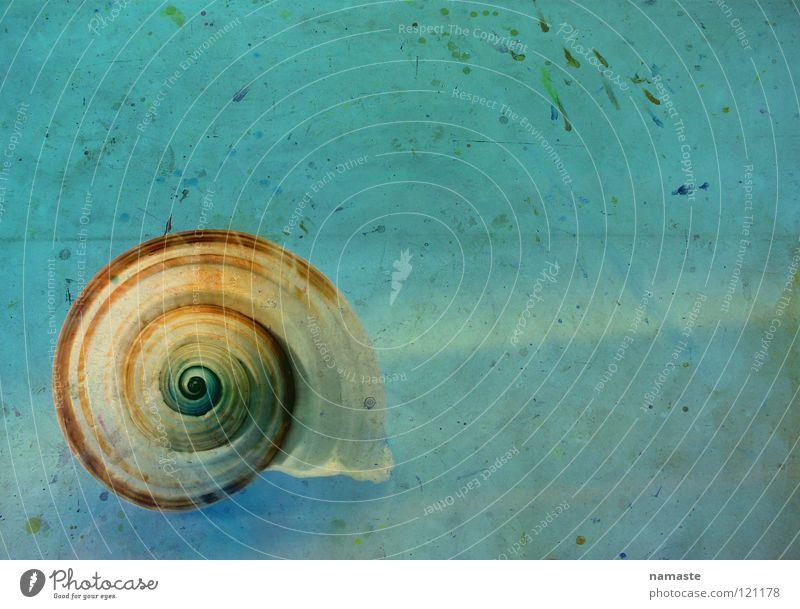 eine sekunde ewigkeit schön alt Meer blau Strand Leben Kraft Kunst Zeit Fisch Vertrauen Konzentration türkis Tier Atelier geschmackvoll