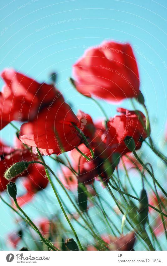 lehnend Natur blau Pflanze schön Sommer rot Landschaft Freude Umwelt Frühling Gefühle Wiese Glück Garten Stimmung glänzend