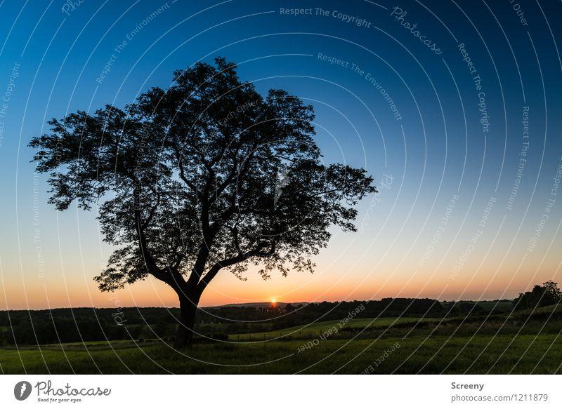 Am Ende des Tages (#1) Ferien & Urlaub & Reisen Tourismus Ausflug Natur Landschaft Pflanze Himmel Wolkenloser Himmel Horizont Sonne Sonnenaufgang