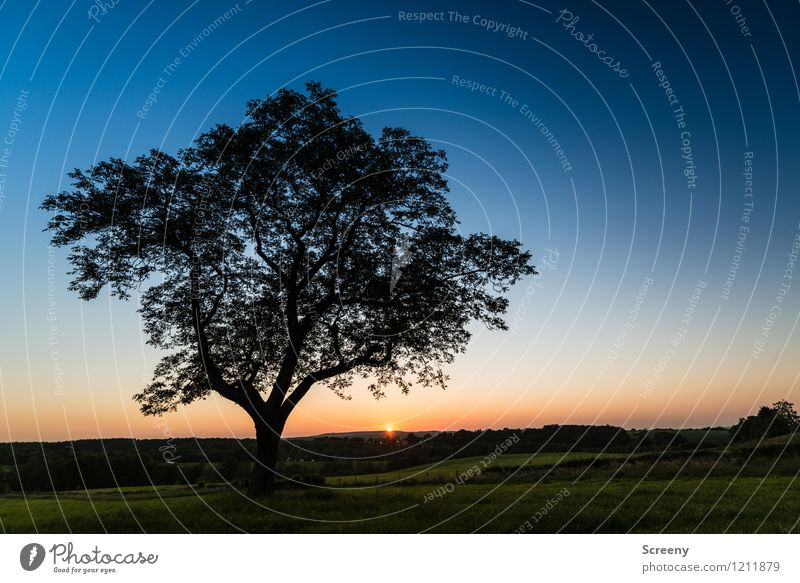 Am Ende des Tages (#1) Himmel Natur Ferien & Urlaub & Reisen blau Pflanze grün Sommer Sonne Baum Landschaft ruhig gelb Frühling Wiese Horizont orange