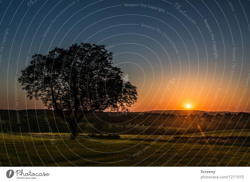 Am Ende des Tages (#2) Himmel Natur Ferien & Urlaub & Reisen blau Pflanze grün Sommer Sonne Baum Landschaft ruhig gelb Frühling Wiese Horizont orange