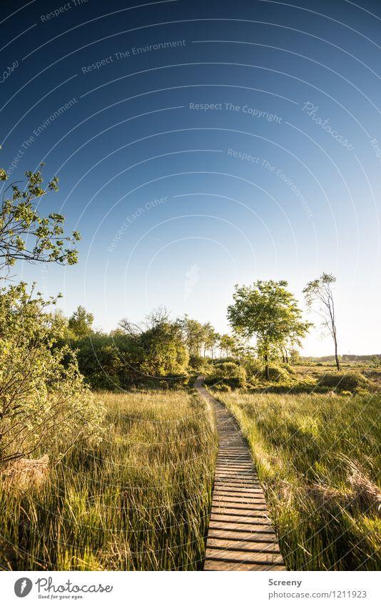 Pfad durch das Moor... Natur Landschaft Pflanze Himmel Wolkenloser Himmel Horizont Sonnenlicht Frühling Sommer Schönes Wetter Baum Gras Sträucher Wiese