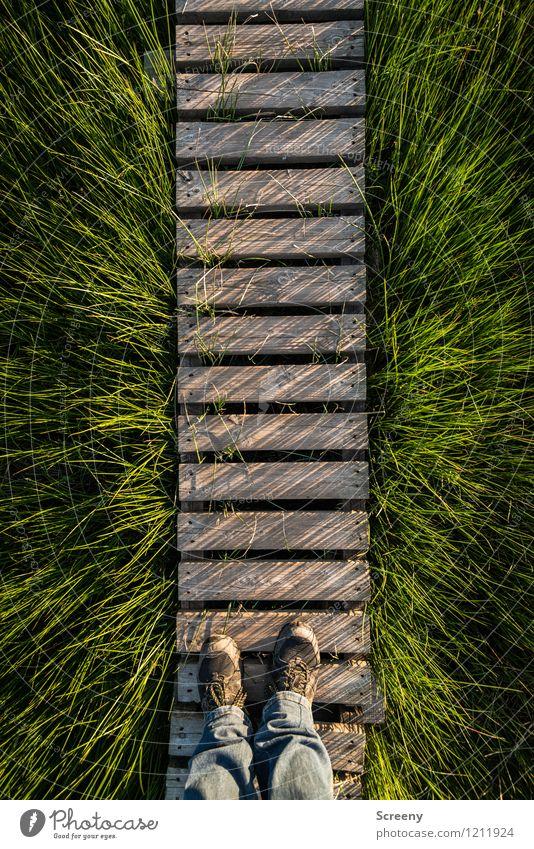 Gras | Steg | Gras Mensch Natur Ferien & Urlaub & Reisen Pflanze grün Sommer Landschaft ruhig Frühling Wiese natürlich Wege & Pfade Holz Beine braun