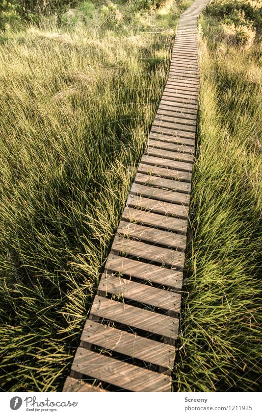 Da lang... Ferien & Urlaub & Reisen Tourismus Ausflug wandern Natur Landschaft Pflanze Frühling Sommer Schönes Wetter Gras Sträucher Wiese Hohes Venn Holz braun