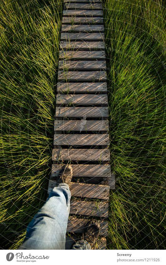 Tritt ins Ungewisse Mensch Natur Ferien & Urlaub & Reisen Pflanze grün Sommer Landschaft ruhig Frühling Bewegung Gras natürlich Wege & Pfade Holz Beine braun