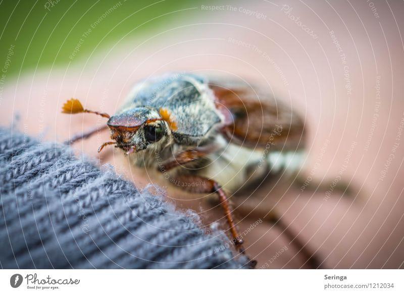 Maikäfer Natur Sommer Tier Herbst fliegen Wildtier Flügel niedlich Tiergesicht Käfer gestrickt Wollpullover
