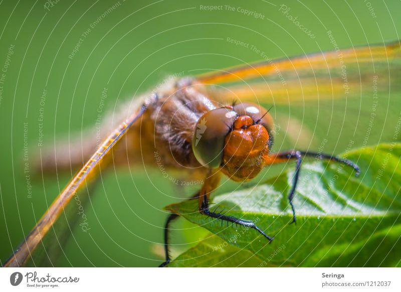 Küss mich oder vergiss mich Garten Park Wiese Feld Wald Tier Nutztier Wildtier Fliege Biene Schmetterling Käfer Tiergesicht 1 Schwimmen & Baden fliegen hängen