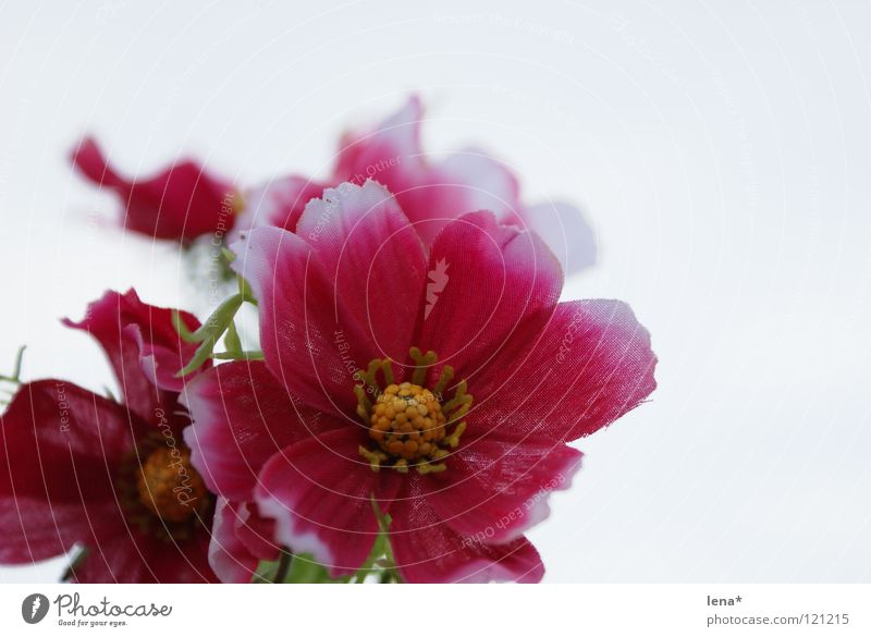 künstliches blümchen rosa weiß Blume gelb grün Frühling Sommer Physik Freundlichkeit süß Kunstblume falsch Farbe Wärme nice cute gestellt