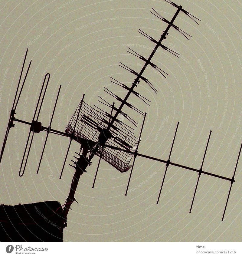 Second Life (Protoyp) Tier Haus grau Luft Metall Wellen Wind Rücken Dach Fernsehen Dienstleistungsgewerbe Rauschmittel Radio Draht parallel Schraube