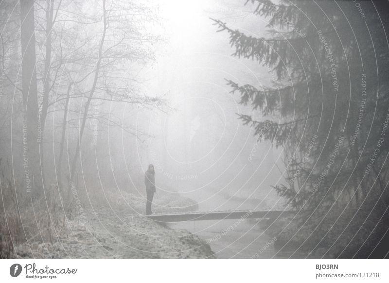 foggy woods #3 Frau Mensch Natur Wasser Baum Winter Einsamkeit Wald dunkel kalt Traurigkeit gehen Nebel nass Frost Fluss